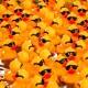 Gumové kachničky do vany s cool slunečními brýlemi závodí